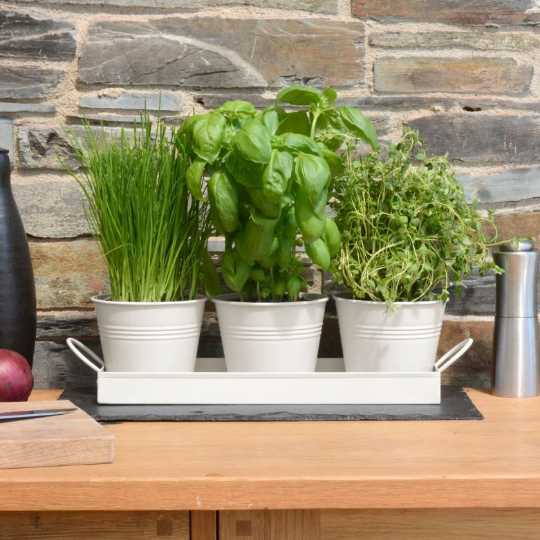 Set of 3 Metal Herb/Plant Pots with Drip Tray (White Chalk)